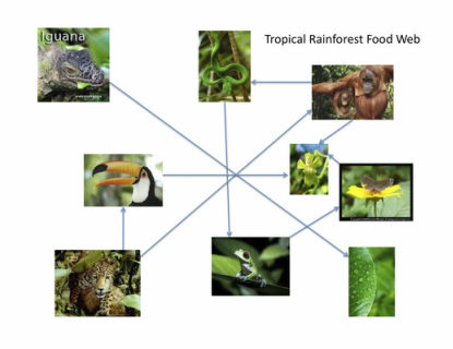 Food Web Interaction with Explanation - Tropical Rainforest
